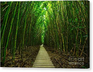 Path To Zen Canvas Print by Jamie Pham