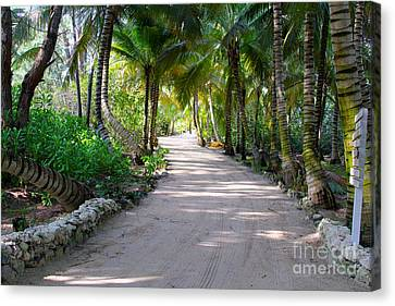 Pathway Canvas Print by Carey Chen