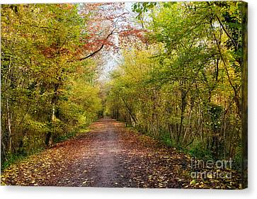 Pathway Through Sunlit Autumn Woodland Trees Canvas Print by Natalie Kinnear