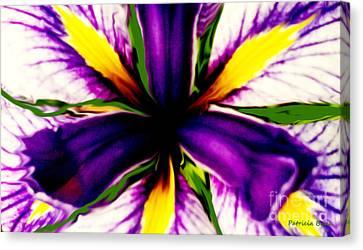 Patricia Bunk's Iris  Canvas Print by Patricia Bunk