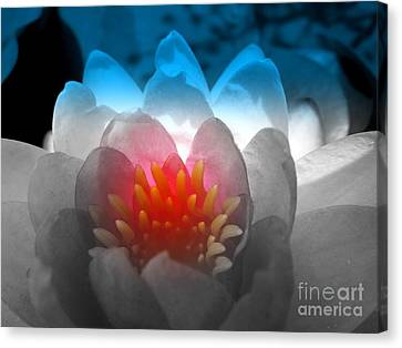 Patriotic Flower Canvas Print by Renee Trenholm