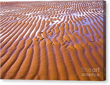 Patterns In The Sand Canvas Print by Diane Diederich