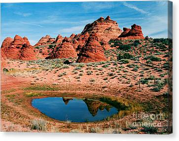 Paw Hole Reflections Canvas Print by Mike  Dawson