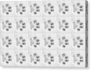 Paw Prints In The Snow Canvas Print by Natalie Kinnear