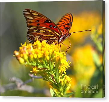 Pea Island Butterfly Canvas Print by Adam Jewell