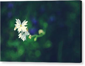 Peace For Annie Canvas Print by Laurie Search