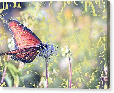 Peace Canvas Print by Kelly Gibson