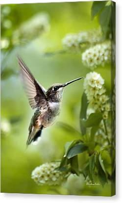 Peaceful Love Hummingbird Canvas Print by Christina Rollo