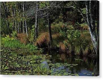 Peaceful Pond Canvas Print by Karol Livote