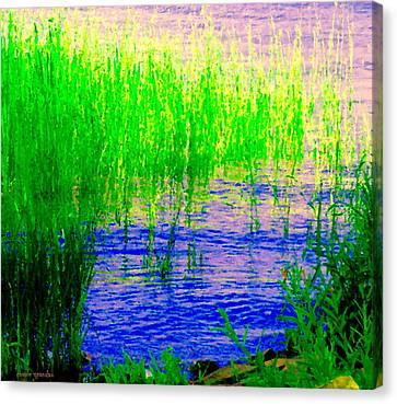Peaceful Stream  Quebec Landscape Art Tall Grasses At The Lakeshore Waterscene Carole Spandau Canvas Print by Carole Spandau