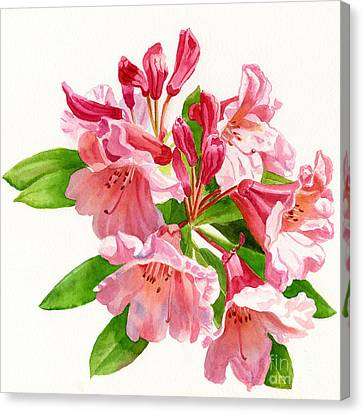 Peach And Pink Rhododendron Canvas Print by Sharon Freeman