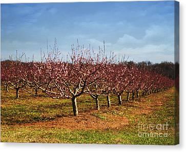 Peach Orchard Canvas Print by Elena Nosyreva