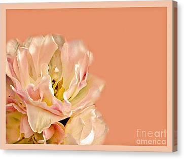 Peach Rose Canvas Print by Carol F Austin