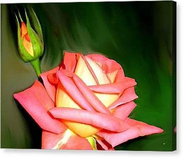 Peach Rose Watercolor Canvas Print by Will Borden
