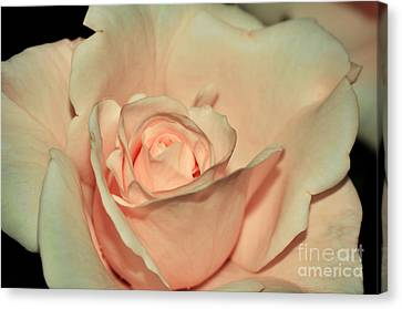 Peaches And Cream Canvas Print by Kaye Menner