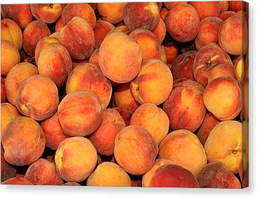 Peaches Canvas Print by Diane Lent