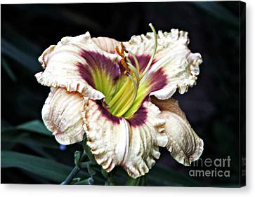 Peachy With Ruffles Lily Canvas Print by Elizabeth Winter