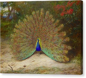 Peacock And Peacock Butterfly Canvas Print by Archibald Thorburn