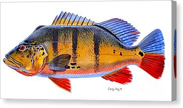 Peacock Bass Canvas Print by Carey Chen