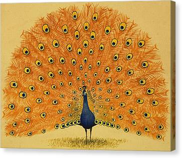 Peacock Canvas Print by English School
