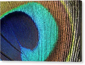 Peacock Feather Abstract Canvas Print by Nigel Downer