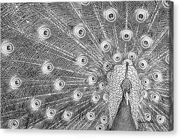 Peacock Canvas Print by Ramona Murdock