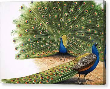 Peacocks Canvas Print by RB Davis