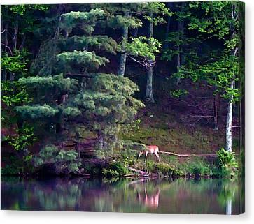 Peaks Of Otter Deer Canvas Print by John Haldane