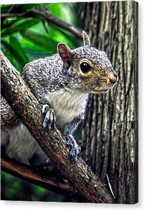 Peanut? Treat? Canvas Print by Sandi OReilly