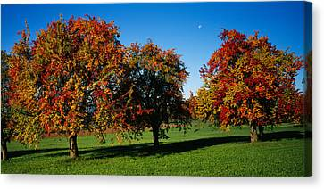 Pear Trees In A Field, Swiss Midlands Canvas Print by Panoramic Images