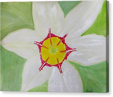 Pearl White Flower Canvas Print by Sonali Gangane