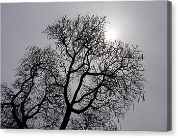 Pearly Silver Filigree On The Sky  Canvas Print by Georgia Mizuleva