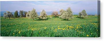 Peartrees Fields Aargau Switzerland Canvas Print by Panoramic Images
