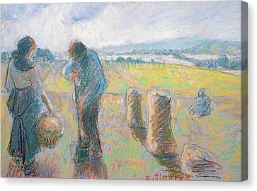 Peasants In The Fields Canvas Print by Camille Pissarro