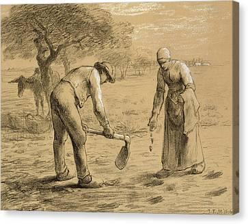 Peasants Planting Potatoes  Canvas Print by Jean-Francois Millet