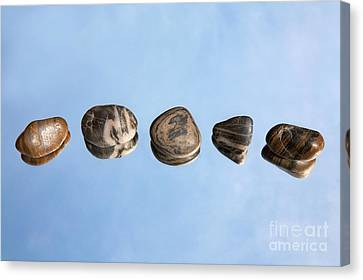 Pebbles And Sky Reflection Canvas Print by Natalie Kinnear