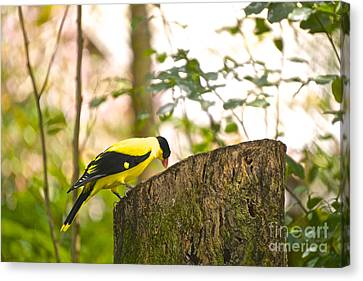 Pecking Away Canvas Print by Judy Kay