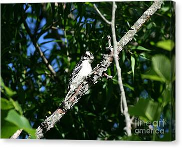 Pecking Pause  Canvas Print by Neal  Eslinger