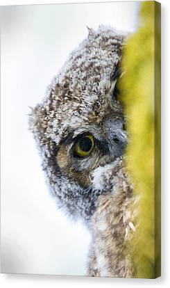 Peek A Boo Baby Owl Canvas Print by Angie Vogel