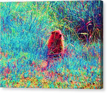 Peek-a-boo Canvas Print by Joseph Wiegand