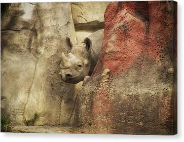 Peek A Boo Rhino Canvas Print by Thomas Woolworth