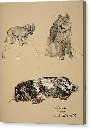 Pekinese, Chow And Spaniel, 1930 Canvas Print by Cecil Charles Windsor Aldin