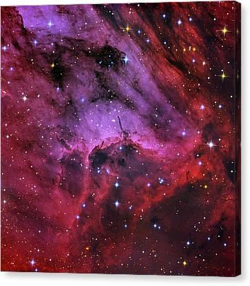Pelican Nebula Canvas Print by Tony & Daphne Hallas