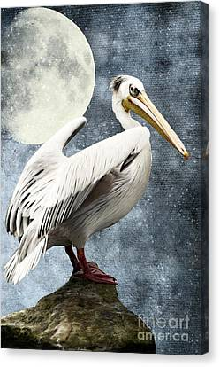 Pelican Night Canvas Print by Angela Doelling AD DESIGN Photo and PhotoArt