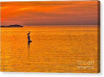 Pelican On A Buoy Canvas Print by Marvin Spates