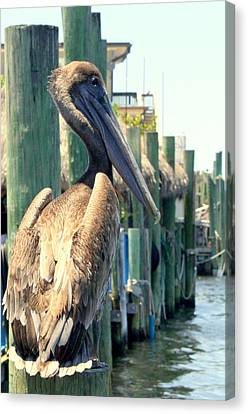 Pelican On A Post Canvas Print by Dorothy Menera
