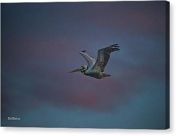 Pelican On The Wing Canvas Print by Bill Roberts