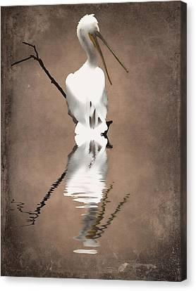 Pelican Perch 2 Canvas Print by Sharon Lisa Clarke