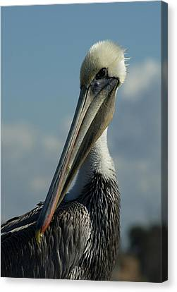 Pelican Profile Canvas Print by Ernie Echols
