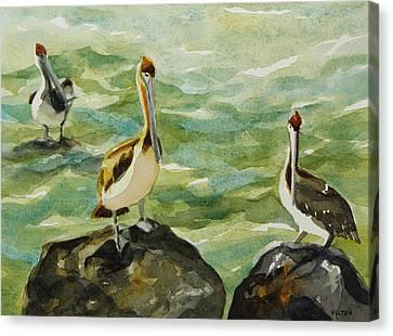 Pelicans By Julianne Felton 9-30-13 Canvas Print by Julianne Felton